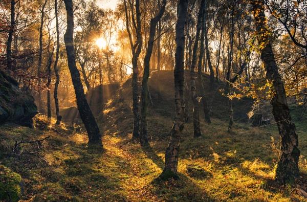 Woodland Medley by Trevhas