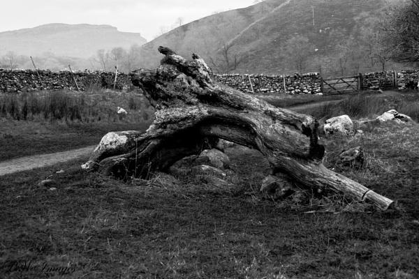 I`m a tree!!! by pwarner500