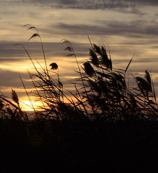 Mid winter sunrise by cdnikon