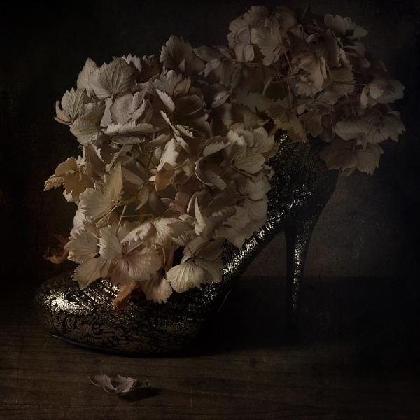 Shoe and Hydrangeas............... by cattyal