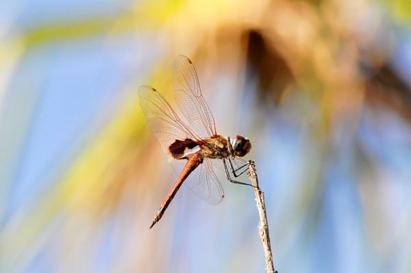 Mamukala Wetlands by JN_CHATELAIN_PHOTOGRAPHY