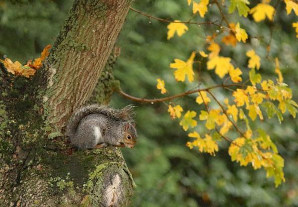 squirrel taken shelter from heavy rain. by HSTONEY222