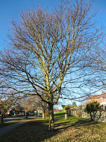 A Tree by Gypsyman