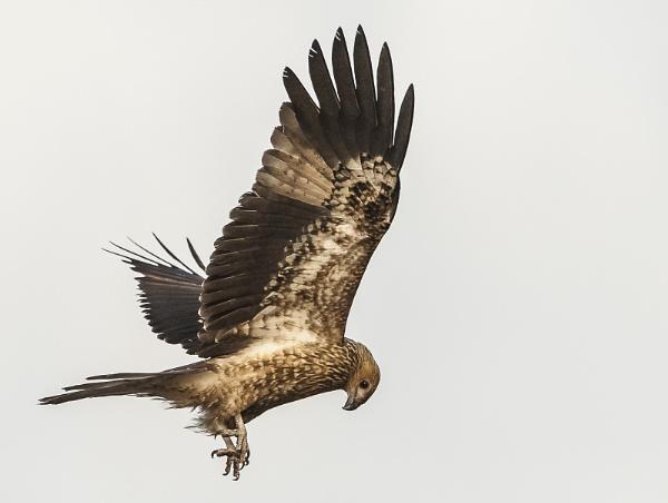 Stretching my wings by Heyneker