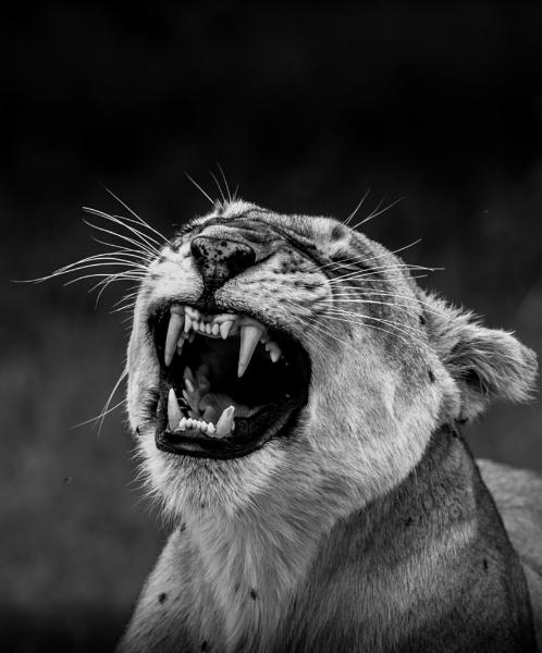 Yawning by mckeedi