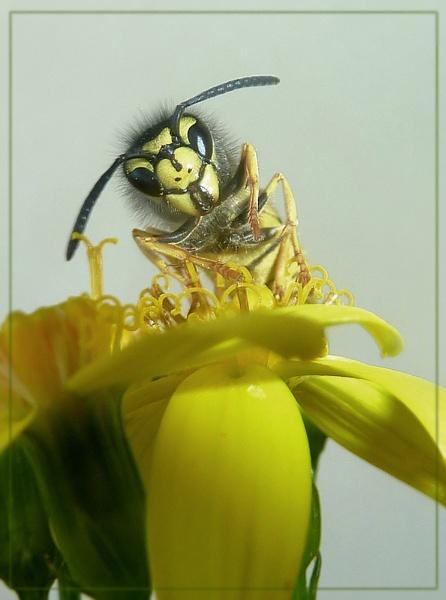 still buzzing! by CarolG