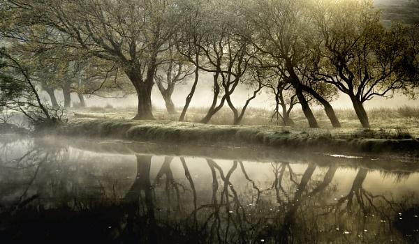 Mist by wynn469
