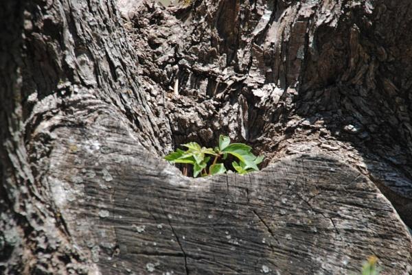 Old Wood! by Chinga