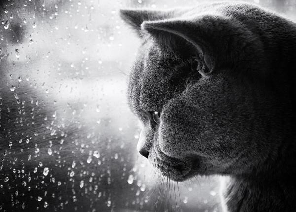 Rainy Days by MartinWait