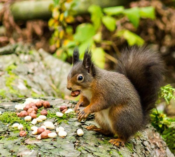 Squirrel 7 by canam