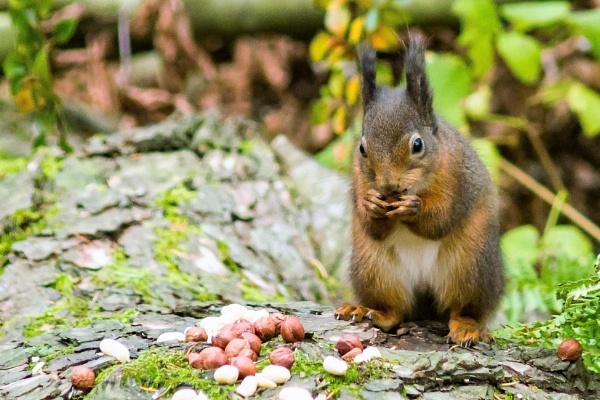 Squirrel 4 by canam