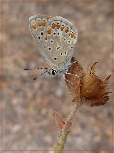 autumn butterflies by CarolG