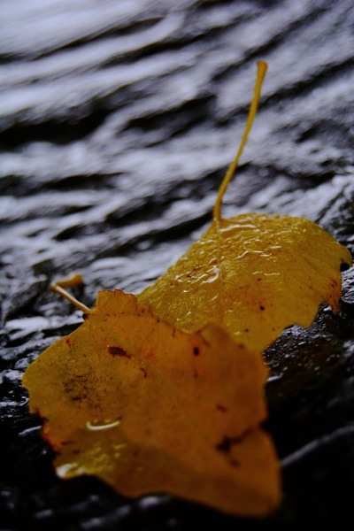 Leaves by Macximilious_XXII