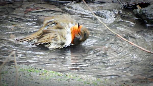 My wash my Neck by mrcoradour