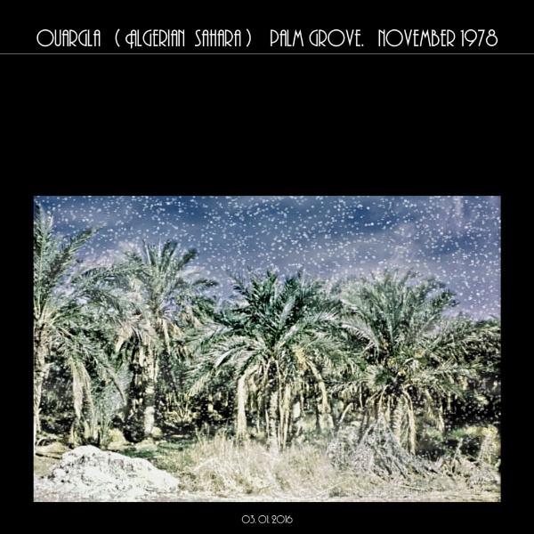 Winter scene? November in Sahara! by gss