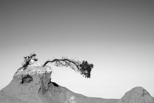 Horizontal Tree by optik