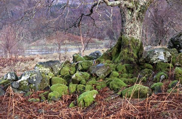 Mossy rocks by pink