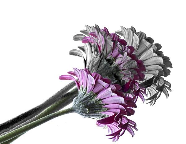 Flowers of Fantasy by Irishkate