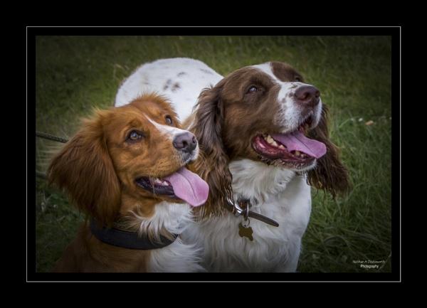Oscar & Spencer by NDODS