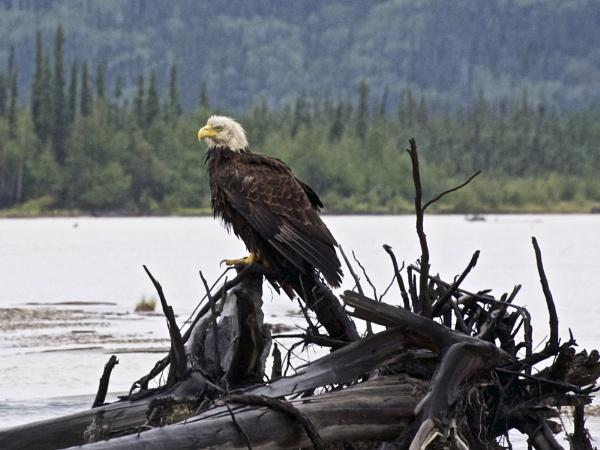 Alaska: July 2015 #38 by handlerstudio
