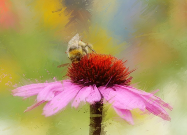 Bee on flower by Danny1970