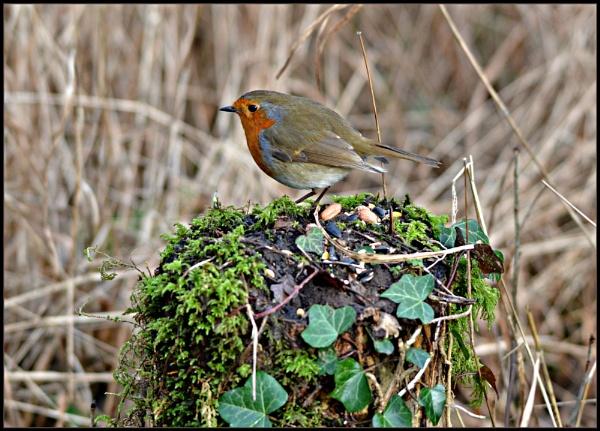 Todays birds in Stanton Woods. by brandish