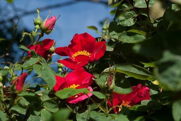 wild flowers by macdaniel