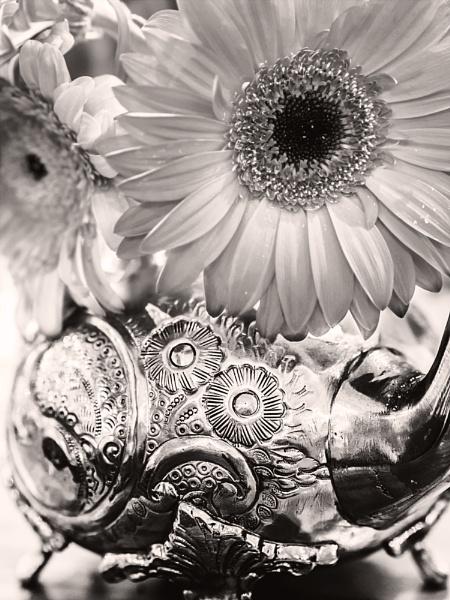 Petal to the Metal by dwilkin