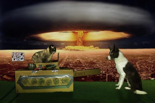 Cat VS Dog by sitan1