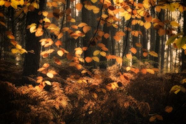 Leaf lights by dawnstorr