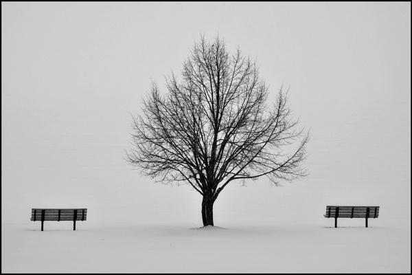 Simplici-tree by djh698