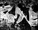 Ice by JawDborn