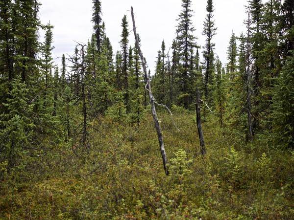 Alaska: July 2015 #44 by handlerstudio