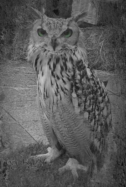 Eagle owel by kazza12