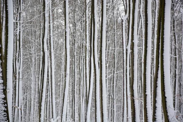 un paseo por el bosque by Herrero