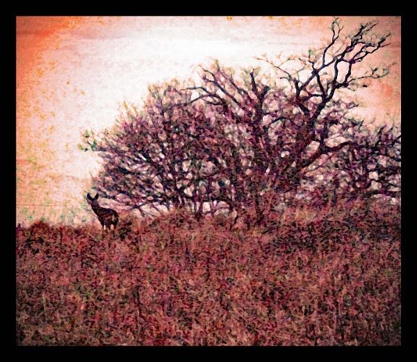 Deer on a hill by Mototaur