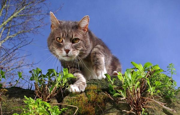 Garden patrol by turniptowers
