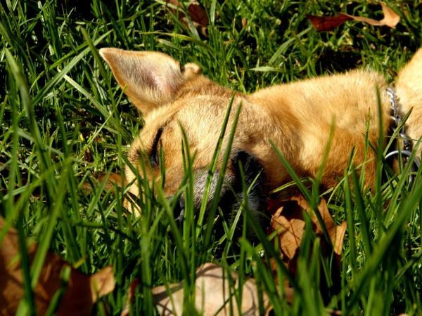 Fall asleep in the autum sun by mtorighelli