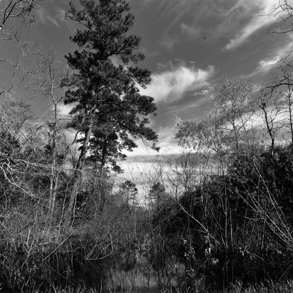 BAYOU @ LAKE HOUSTON by PetesPix