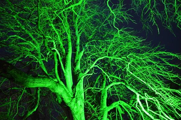 random green tree by graceland