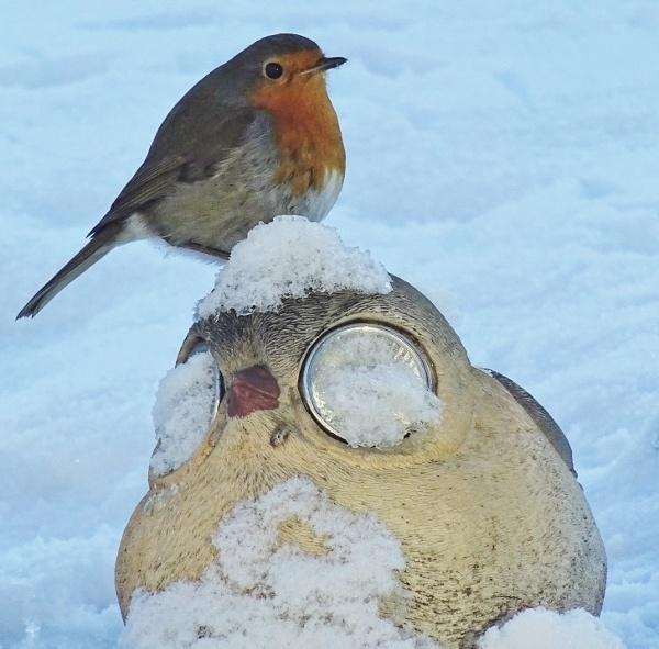 Robin on bird lamp
