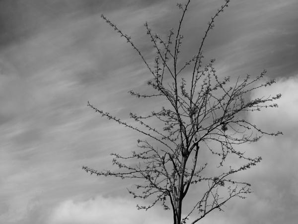 Tree by dannyr
