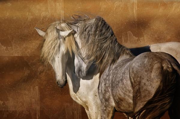 Horse Composite by Msalicat