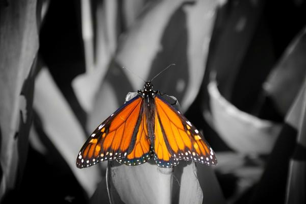 NZ Butterfly by mattneilj