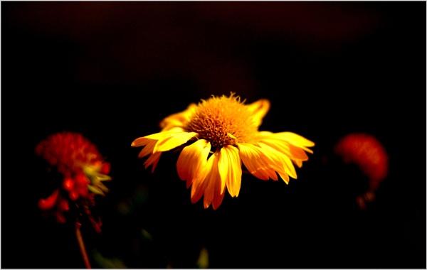 the beautiful light of wisdom.. by PranavMishra
