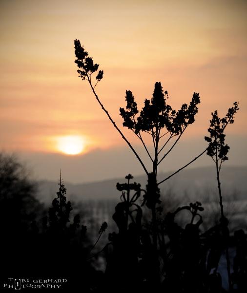 Winter Sundown by Toger