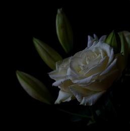 White Rose.......
