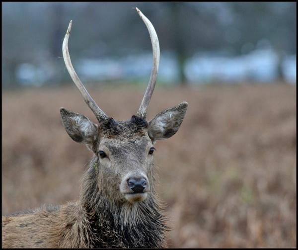 Deer portraits. by brandish