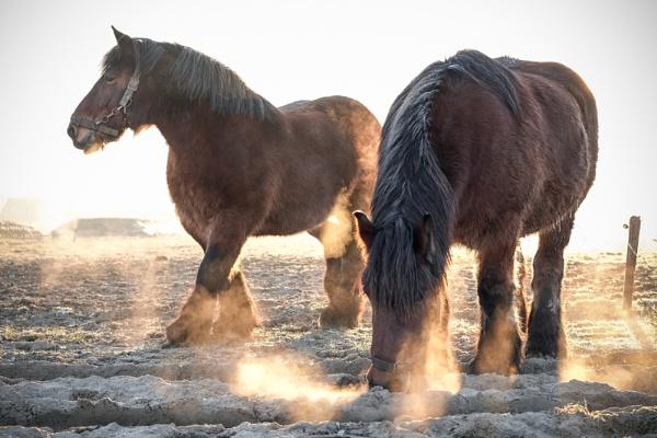 The Horses Morning Sun Breath by Drummerdelight