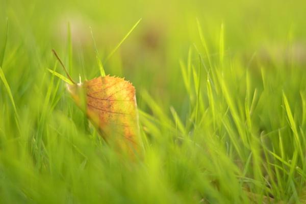 Leaf by KristiiHD